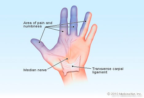 Illustration Picture Of Hand Structures Finger Anatomy