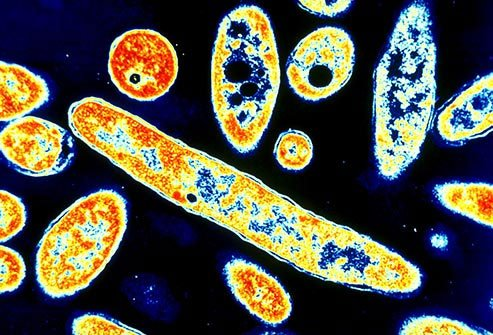 Our ancestors faced many viral illnesses as our species evolved.