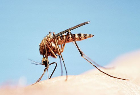 Mosquitoes are more than a bother. They can spread West Nile virus.
