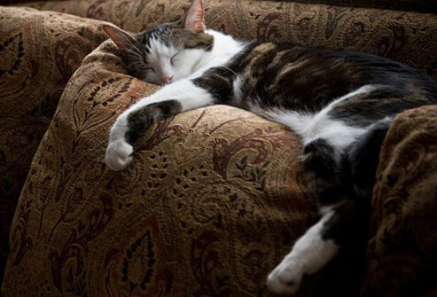 Cat napping on couch.