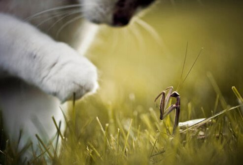 Cat playing with insect.