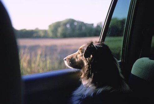 Photo of dog looking out of car window.