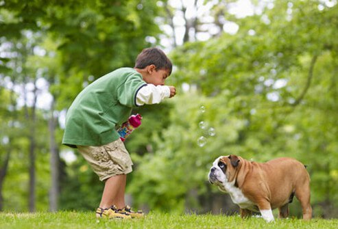 A boy blowing bubbles and playing with his dog
