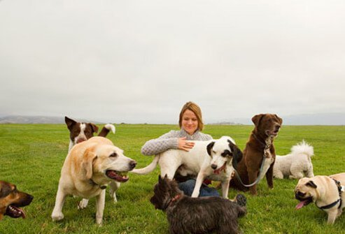A woman and a number of dogs sitting in a field
