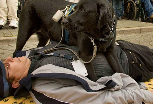 A seizure dog lying on a man having a seizure
