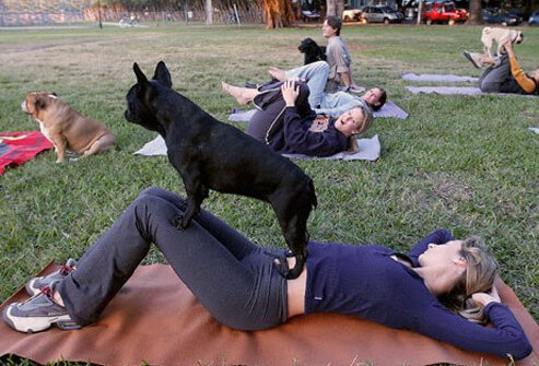 Women doing yoga with their dogs