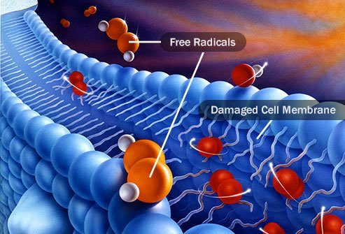 These chemicals cause the oxidation process that damages your cells and the genetic material inside them.