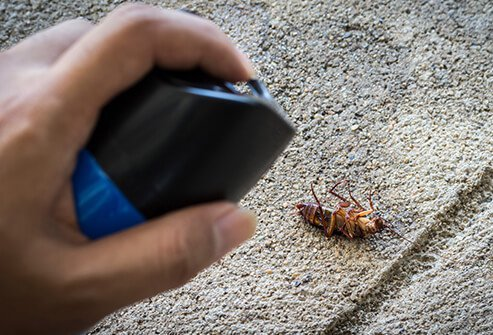 Cockroaches can cause an allergic reaction.