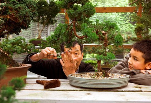 Photo of a man tending a bonsai garden with his grandson.