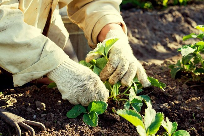 Gardening is a great way to burn calories, and strengthen and build muscles.