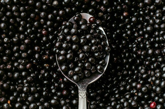 Elderberries contain lectin and cyanide that may make you feel sick.