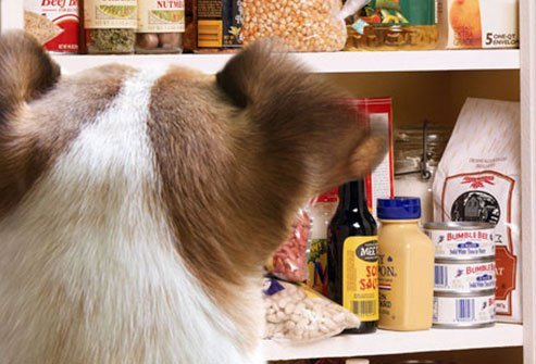 keep dogs out of the pantry
