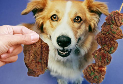 dogs can eat lean meat