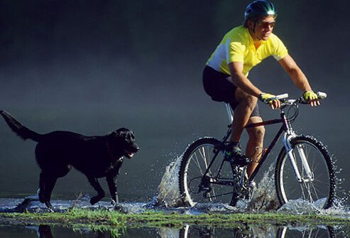 A cyclist and his dog.