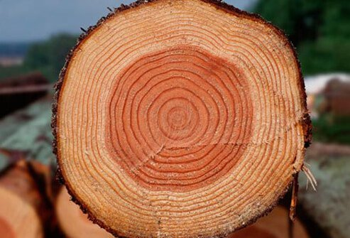Photo of a cut log showing tree rings.