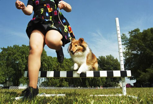 Dog and owner jumping over an obstacle