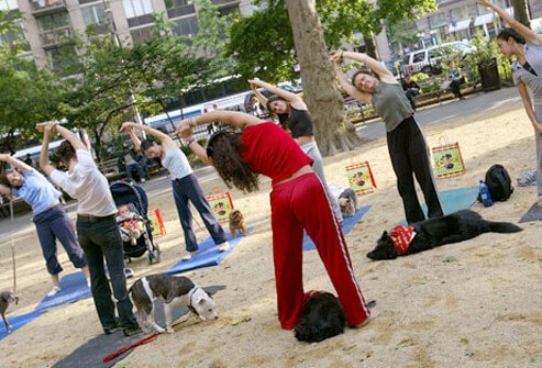 Dogs and their owners doing yoga in the park