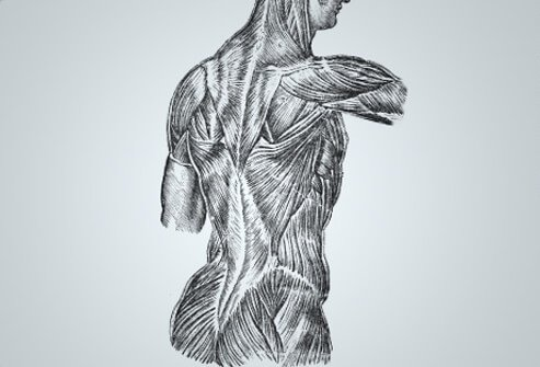 The term fibromyalgia is derived from both Latin and Greek origins.