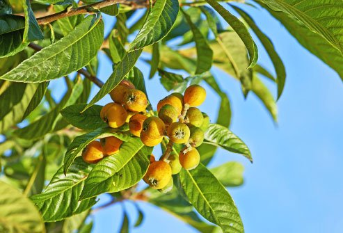 Marula oil is rich and helps hydrate dry skin.