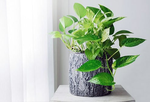 Plants may help raise your test scores, make it easier to concentrate on your tasks, and strengthen your memory.