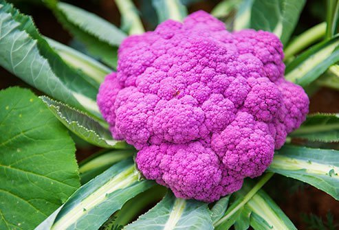 Purple cauliflower is rich in anthocyanins.