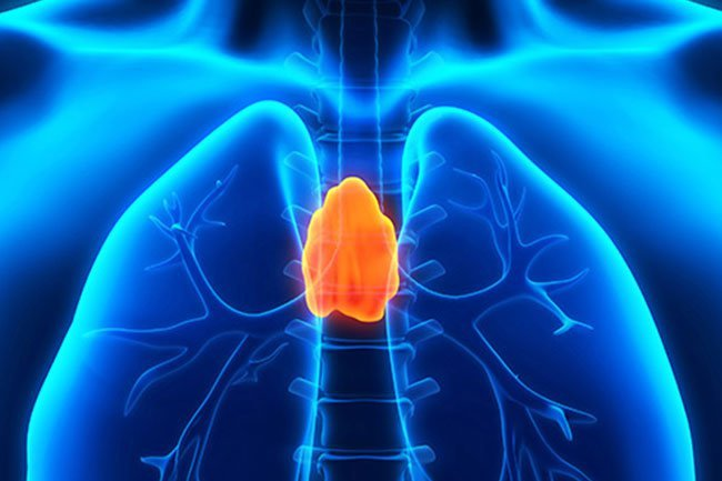 Your thymus sits high in your chest behind your breastplate.