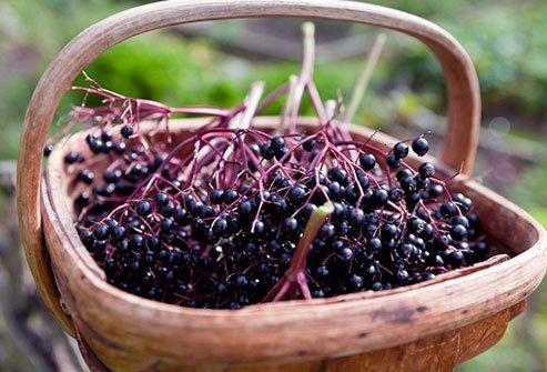 Extracts of elderberry have antiviral, anticancer, and anti-inflammatory properties.