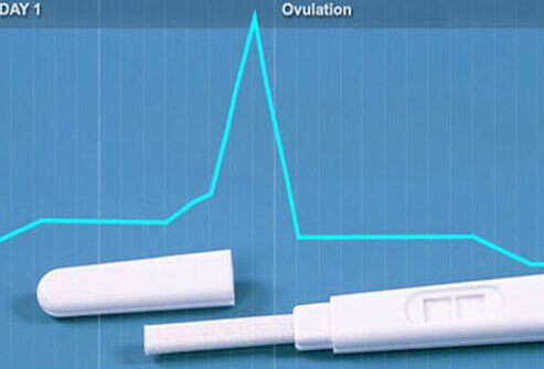 An ovulation test.