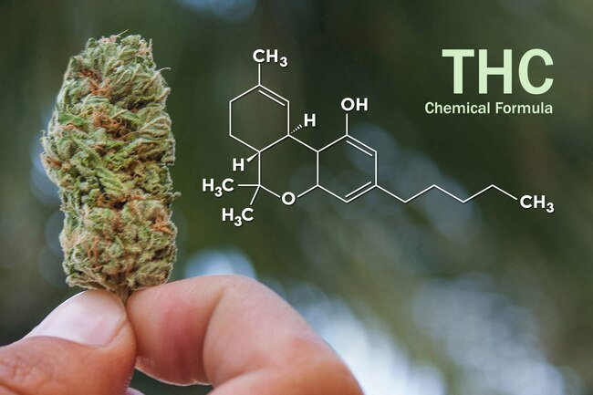 THC triggers receptors in your brain called endocannabinoid neurotransmitters.