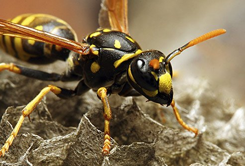 Wasps may reside under your roof so watch for flying insects coming or going from small holes.