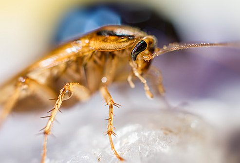 Coakroaches may be hiding in the kitchen, bathroom, near food and water, and in cluttered areas.