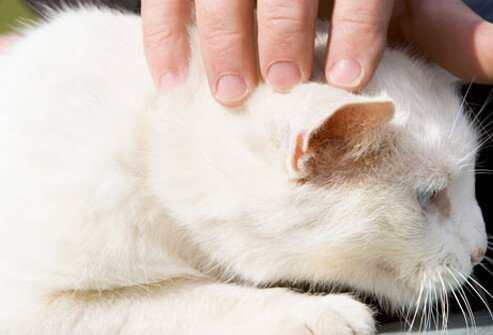 Only CA-MRSA strains have been documented to do this with pets.