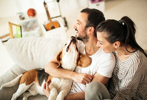 70% of American homes have pets and one of the biggest issues are allergies.