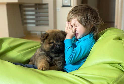 Itchy eyes, sneezing or a runny nose after spending time with a pet may be a sign of an allergic reaction.