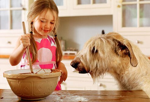 Photo of girl making homemade dog treats.