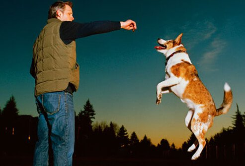 Photo of man offering treat to jumping dog.