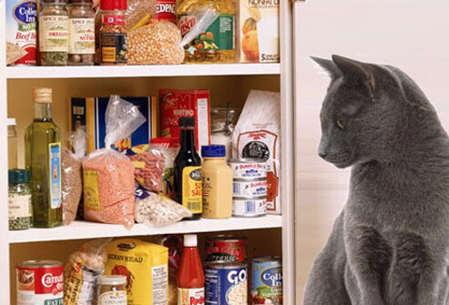Cat sitting by open pantry
