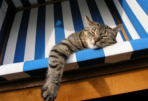 Lazy Cat Lying in Beach Chair