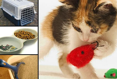 Cat carrier, kitten food, litter box, and toys