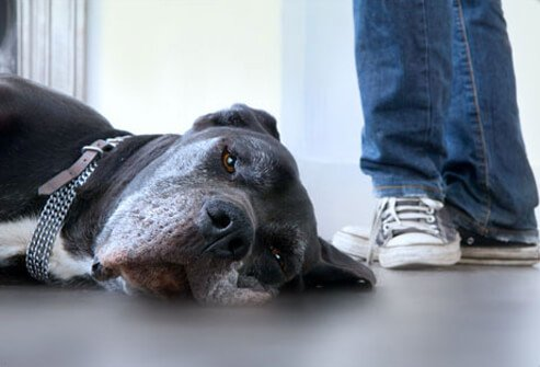 Photo of dog lying on floor.