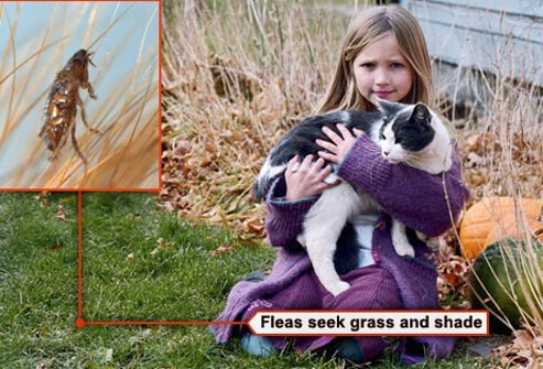 Photo of girl and cat by flea on grass.