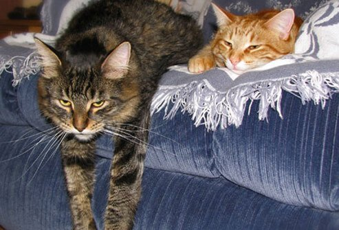 Photo of cats on sofa.