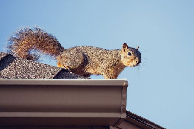 Animals nesting in your attic or other areas of your home may lead to odors.