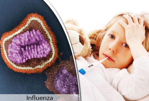 Flu illness begins one to four days after the virus enters your body.