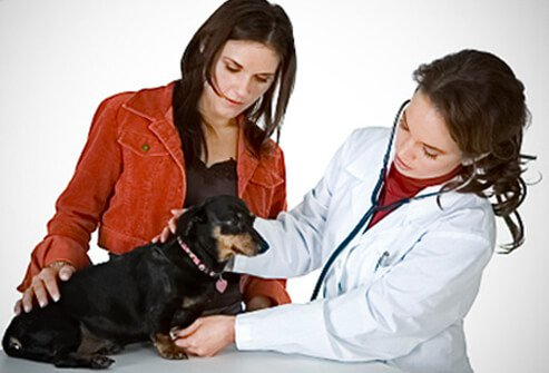 Ringworm prevention tip #7: Take your pet to the vet if it has patches of missing hair, which could be a sign of a fungal infection.