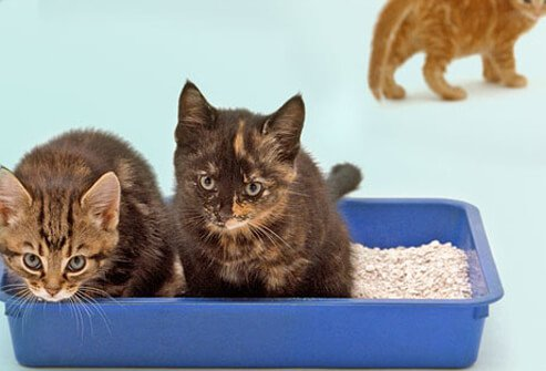 Kittens using litter box.