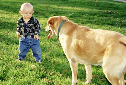 A small boy with a big dog.