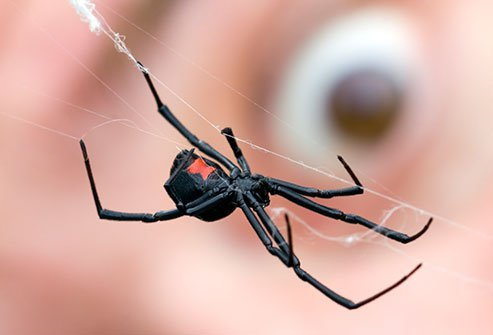 Most spiders pose no threat to humans.
