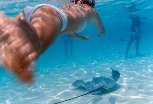 Stingrays have long tails capable of inflicting deep puncture wounds.