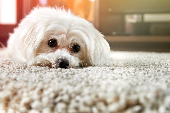 Carpet harbors dust mites, mold, gases, and toxic gases that may cause lung damage.